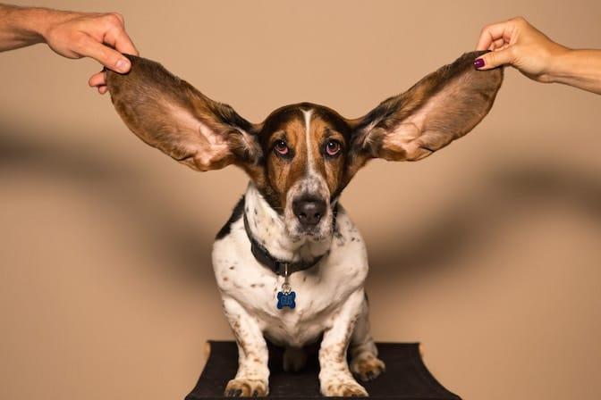 Capacità di accogliere e ascoltare i feedback