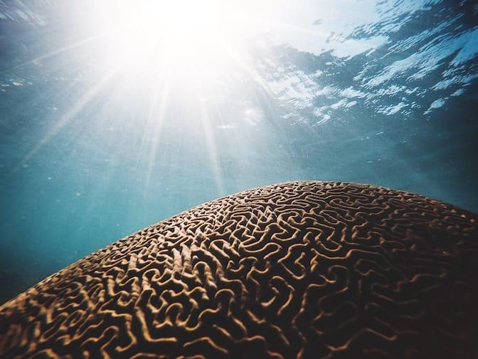 Le capacità cognitive e intellettuali